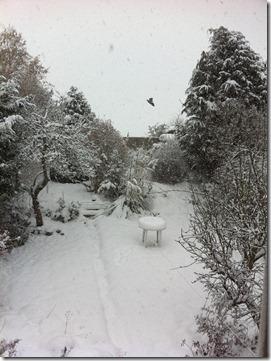 snow (32)