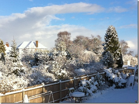 snow (40)